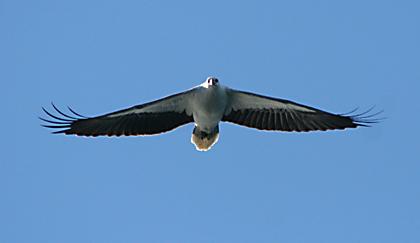 release5_eagle