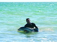 Dolphin rescue (Largs Bay)