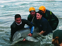 Dolphin rescue Torrens Island