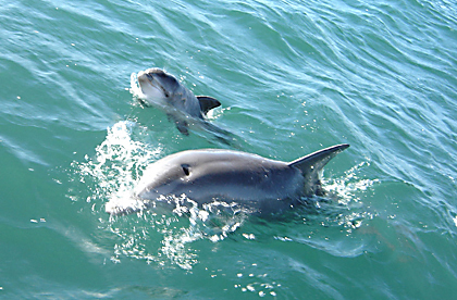 research1_dolphins