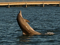 research2_dolphins