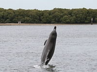 research3_dolphins